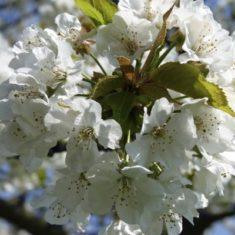 Blossom #3 | Richard Brockbank