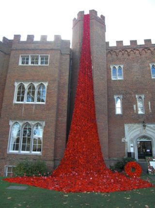 Poppies at Hertford Castle