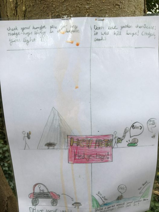 White poster on tree divided into four asking people to look out for hedgehogs.. Top left is a message to check wood piles before having a bonfire; top right asks people not to use chemicals in the garden because they kill slugs which hedgehogs eat.; bottom left asks drivers to take care when driving and bottom right asks people to build a fence around a garden pond so hedgehogs don't fall in. In the middle is an oblon sign in red with the message 'Help protect hedgehogs!' | Geoff Cordingley