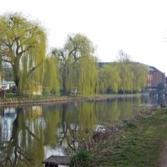 Weeping Willows in Ware | by Richard Brockbank