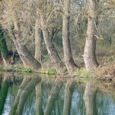 Trees overhanging the Lee Navigation near Ware | by Richard Brockbank