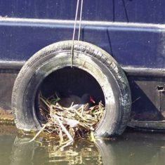 On the way back, we noticed this opportunistic nesting spot | Richard Brockbank