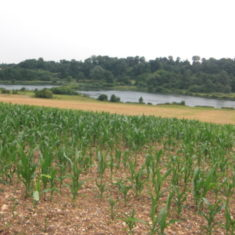 The maze used to feed the pheasants which should not be required when the shoot ends in 2014