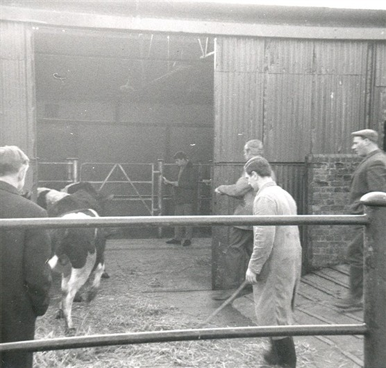 The Old Cattle Market | Hertfordshire Archives and Local Studies