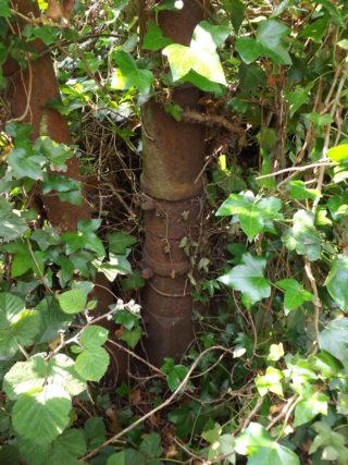 Unknown cannon barrel